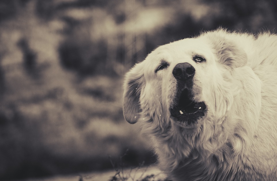 Characteristics of a Dog With Nervous Aggression